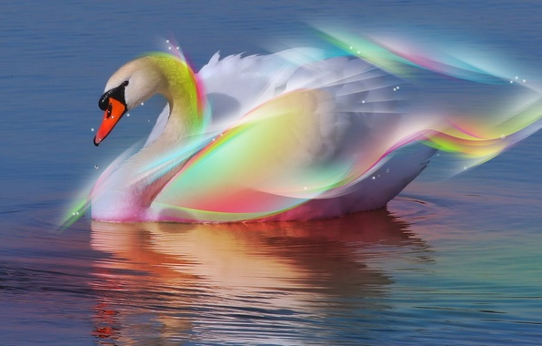 Picture Water, Swan, Rainbow