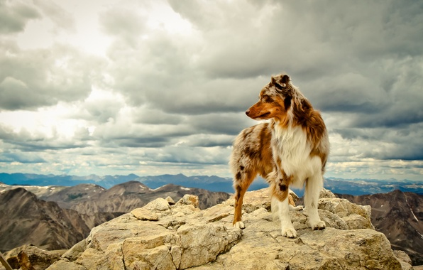 Picture mountains, each, dog