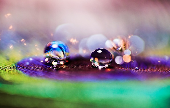 Picture drops, macro, Rosa, background, pen, Wallpaper, drop, blur, wallpaper, peacock, widescreen, background, macro, bokeh, full …
