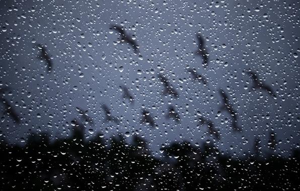 Picture glass, drops, night, rain, window, rain drops on glass