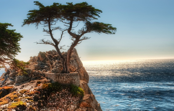 Picture tree, rocks, The ocean