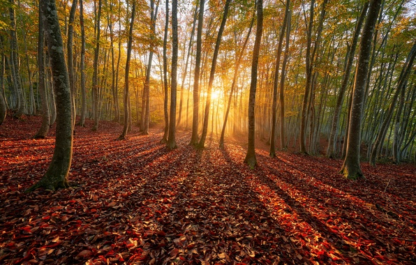 Picture autumn, forest, the sun, rays