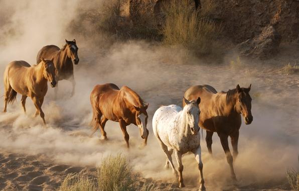 Picture animals, photo, horses, dust, horse, wildlife, the herd, the herd
