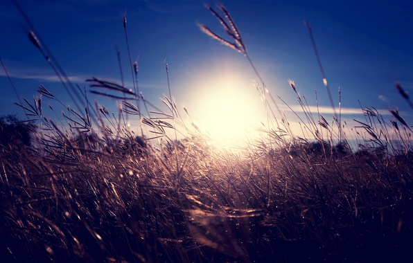 Photo wallpaper dry, the sun, the sky, grass, sunset, spikelets