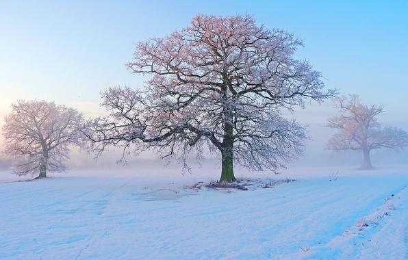 Picture winter, frost, snow, trees, fog, morning, frost