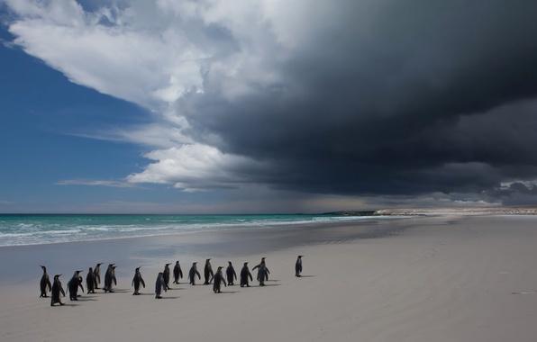 Picture sea, the sky, clouds, landscape, bird, penguins