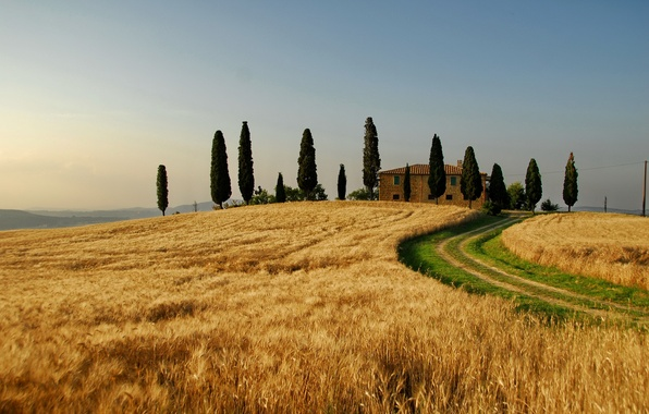 Picture wheat, field, autumn, the sky, trees, nature, tree, landscapes, field, home, Italy, pulling