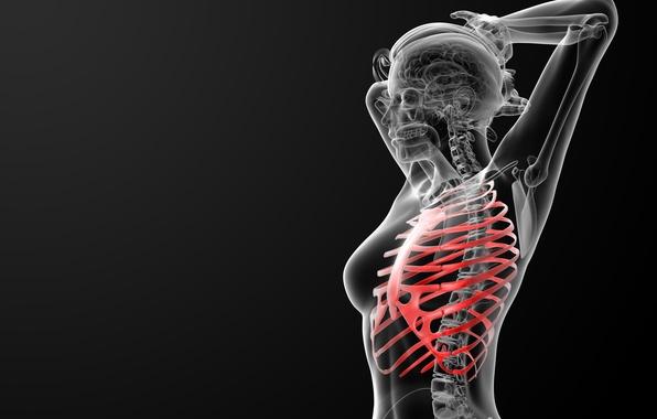 Picture bones, ribs, human figure