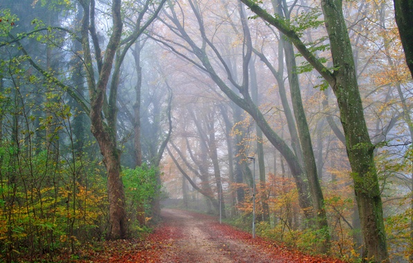 Picture road, autumn, forest, fog, Park