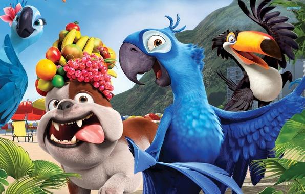 Picture dog, parrots, fruit, Rio, rio, Cartoon
