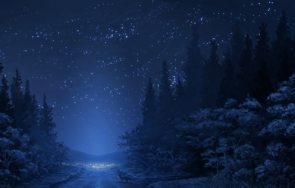 Picture winter, road, forest, the sky, stars, snow, trees, mountains, night, Fox