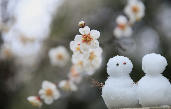 Picture leaves, flowers, branches, petals, Sakura, snowmen, a couple, flowering