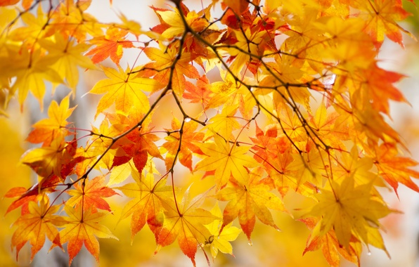 Wallpaper autumn, leaves, nature