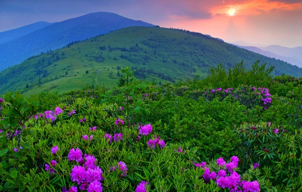 Picture the sky, grass, trees, landscape, sunset, flowers, mountains, nature, the clouds