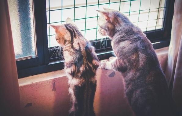 Picture house, Koshak, cats, window, observation