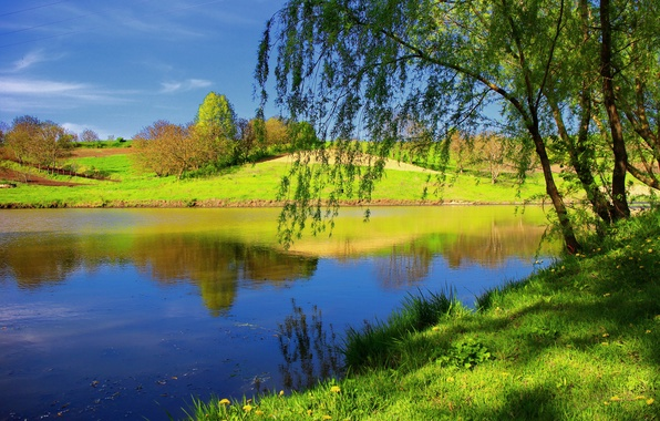 Picture summer, grass, trees, nature, river
