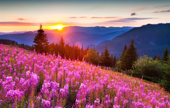 Picture forest, summer, light, flowers, mountains, nature, photo, positive, beautiful, the sun