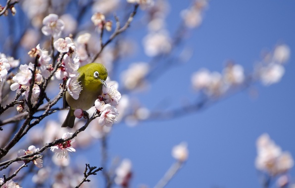 Picture tree, bird, spring