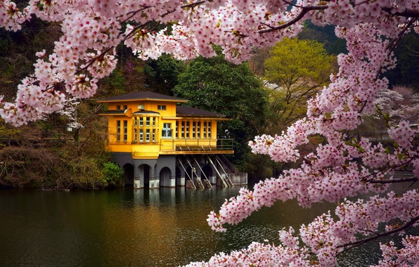 Picture branches, lake, house, color, spring, Japan, Sakura, April, the village, Prefecture, the island of Honshu, …