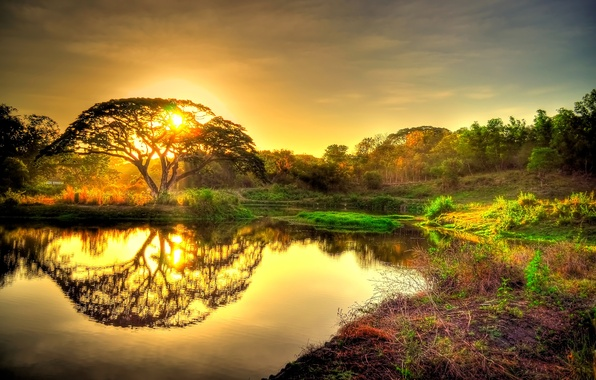 Picture forest, the sky, the sun, sunset, pond, reflection, tree