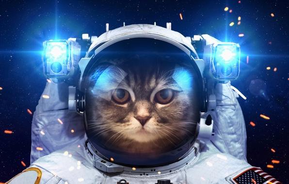 Picture cat, space, light, humor, astronaut, the suit, lanterns