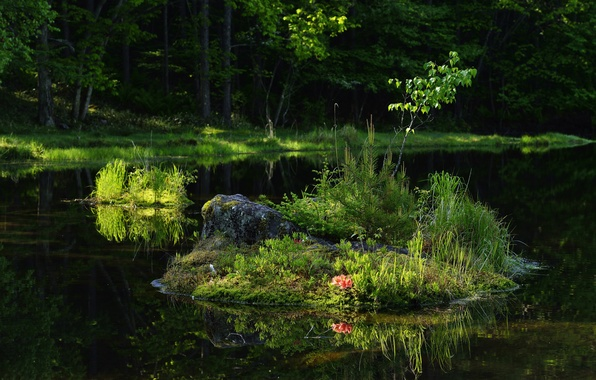 Picture forest, summer, grass, trees, river