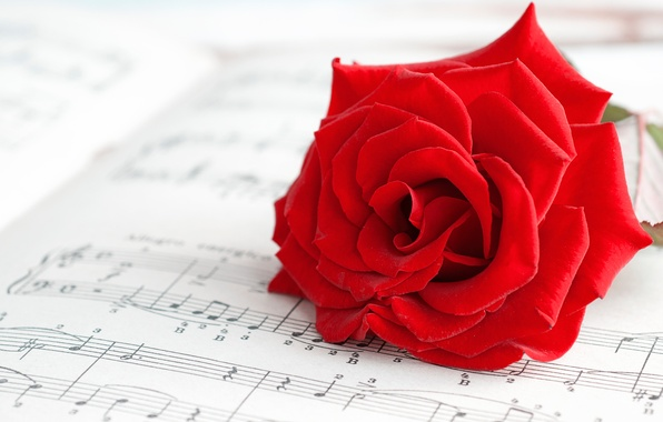 Picture macro, flowers, notes, background, widescreen, Wallpaper, mood, rose, petals, music, wallpaper, red, rose, flowers, red, …