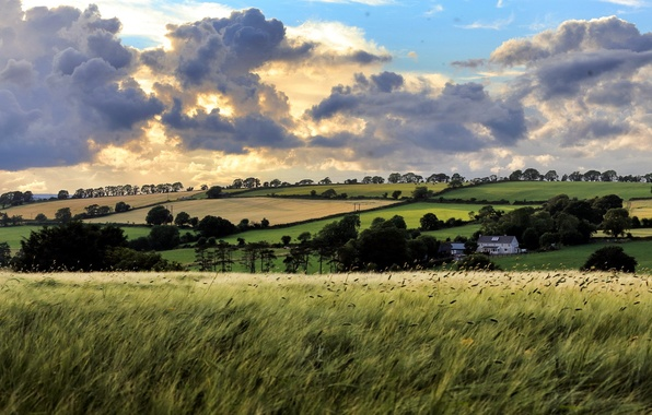 Picture field, summer, the sky, landscape