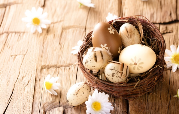 Picture chamomile, eggs, Easter, wood, flowers, eggs, easter, camomile