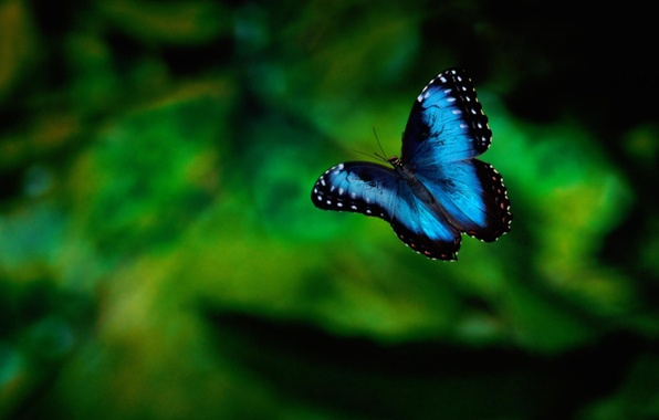 Picture greens, background, butterfly, insect
