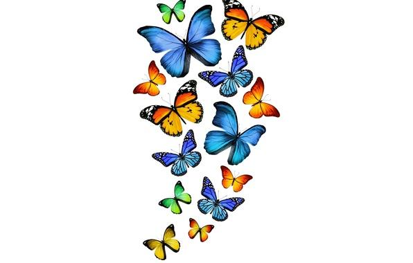 Picture butterfly, green, yellow, green, blue, yellow, blue, butterflies