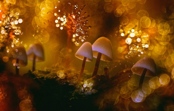Picture macro, light, Rosa, glare, heat, the world, mushrooms, moss, bokeh, lichens