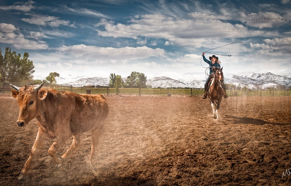 Photo Wallpaper Farm Horse Rodeo Cowgirl Ropping Cattle