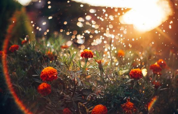 Picture the sun, light, flowers, glare