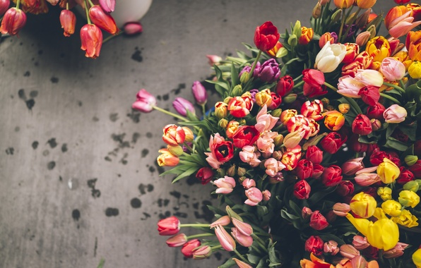 Picture flowers, tulips, a lot, different
