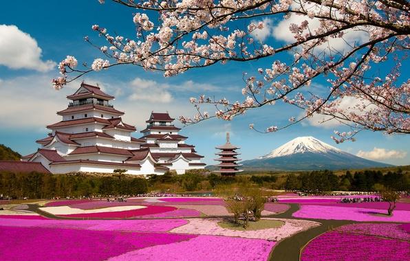 Picture branches, Park, castle, the volcano, Japan, Sakura, Japan, flowering, Mount Fuji, Fuji, Fukushima, Fukushima, Aizuwakamatsu, …