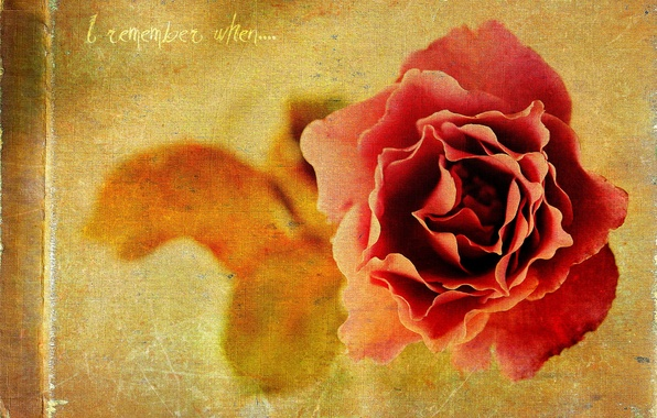 Picture style, background, rose