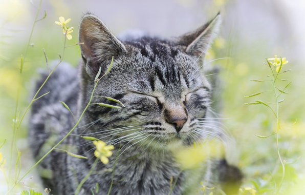 Picture cat, grass, cat, flowers, grey, striped
