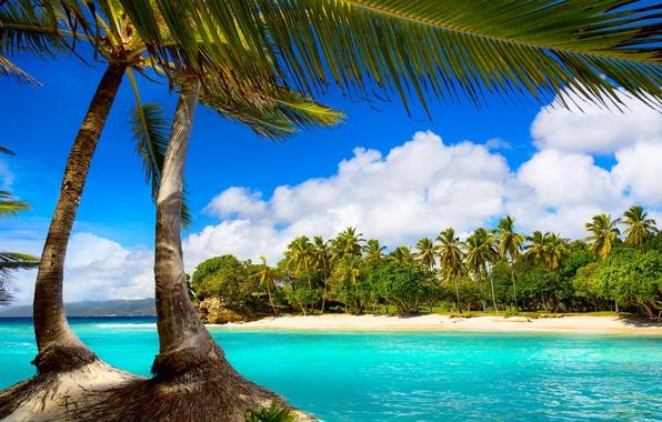 Picture sea, beach, tropics, palm trees, summer, beach, sea, ocean, paradise, vacation, palms, tropical
