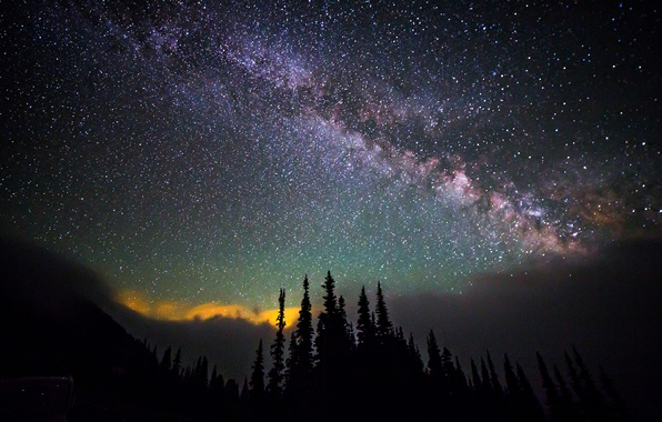 Picture the sky, space, stars, trees, night, space, the milky way