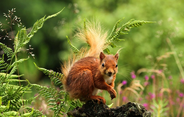 Picture forest, grass, flowers, nature, protein, rodent