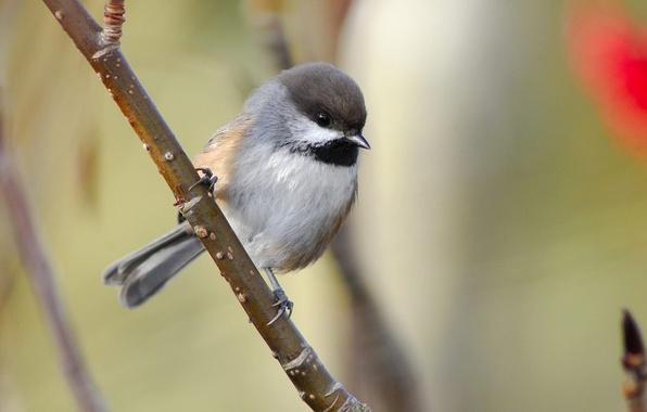 Picture branch, bird