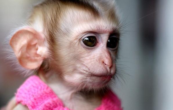 Picture dress, monkey, pink, monkey