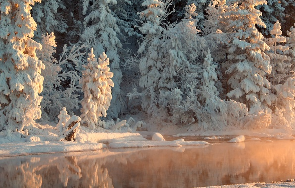 Picture winter, forest, water, snow, trees, reflection, river, Sunny