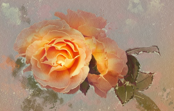 Picture flower, rose, texture