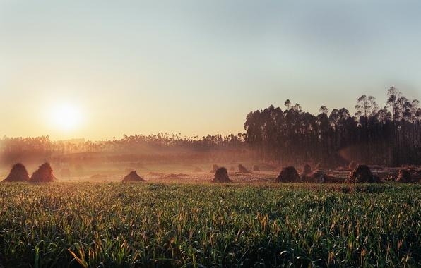 Picture grass, hay, stogi, So rise the Sun