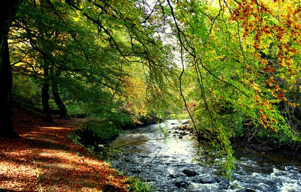 Picture autumn, forest, trees, stream, shore, foliage