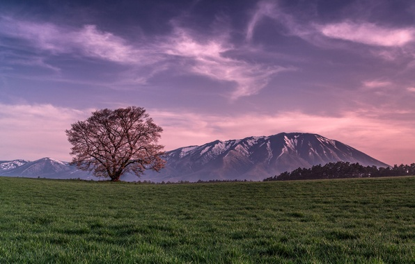Picture field, the sky, grass, clouds, tree, Mountains, the evening, pink