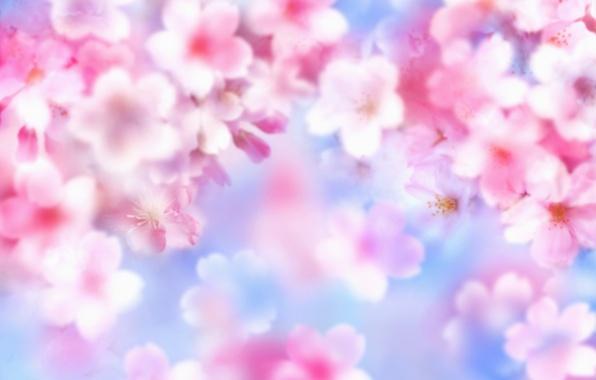 Picture summer, flowers, brightness