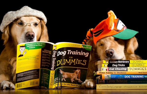 Picture dogs, table, hat, two, books, humor, glasses, cap, black background, Retriever, reading